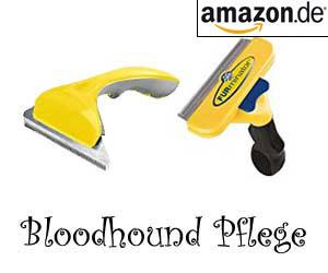 Bloodhound Pflege