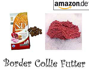 Border Collie Futter