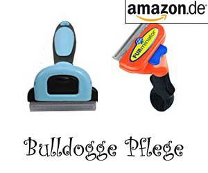 Bulldogge Pflege