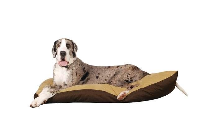 Deutsche Dogge auf Hundematratze