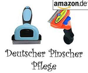 Deutscher Pinscher Pflege