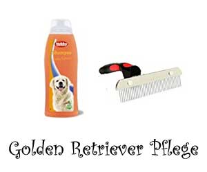 Golden Retriever Pflege