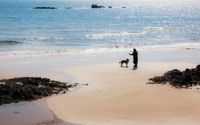 Hund am Strand in Spanien