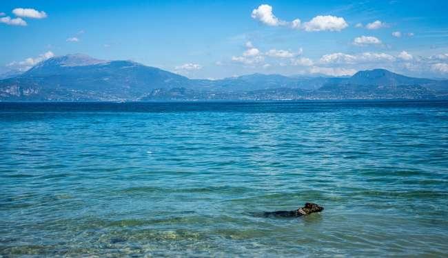 Schwimmender Hund im Gardasee