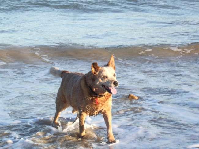 Urlaub mit Hund an der Dänischen Küste