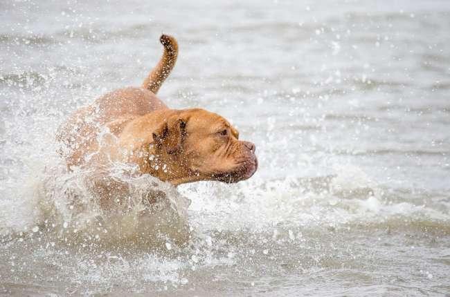 Im Meer tobender Hund