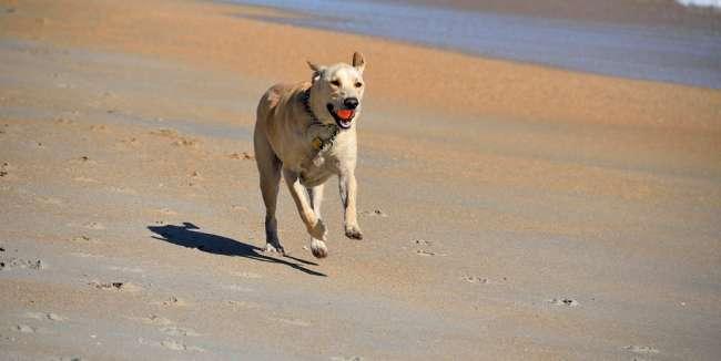 Strandurlaub mit Hund in Deutschland
