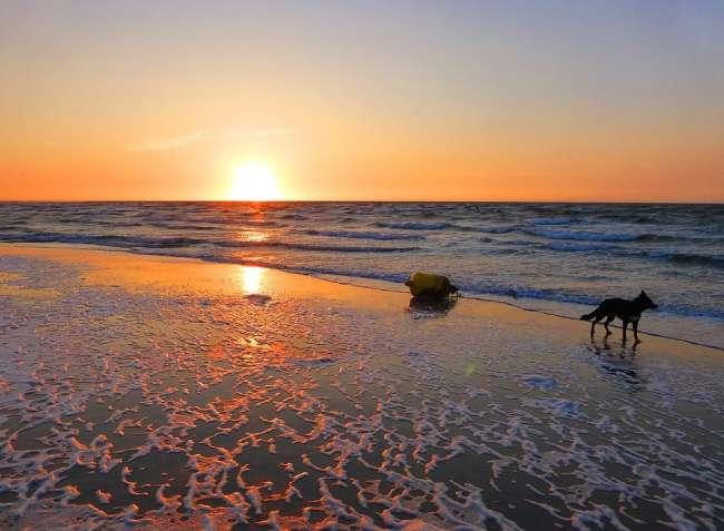 Hund am Strand in Zeeland