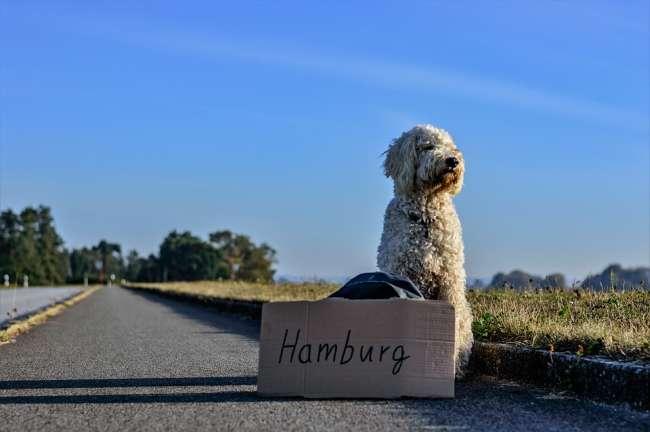 Urlaub mit Hund Deutschland