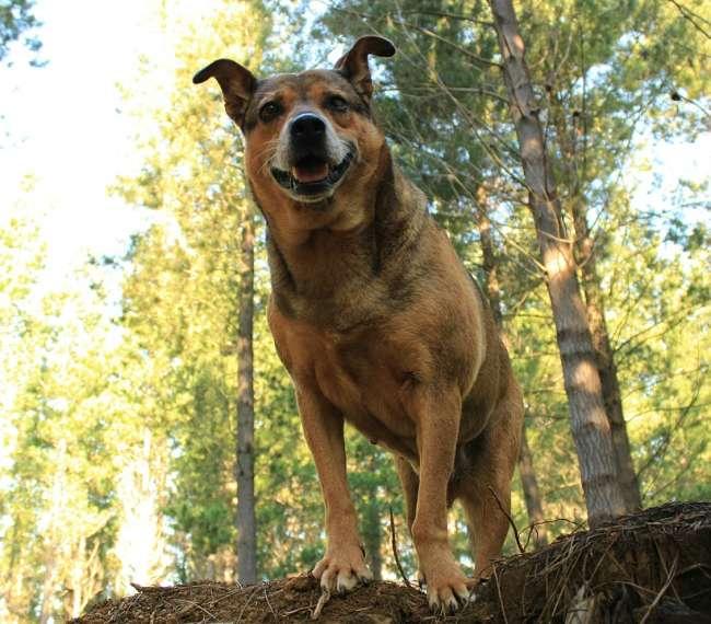 Ausflug mit Hund in der Naturlandschaft Tschechiens