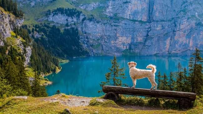 Wanderurlaub mit Hund in der Schweizer Bergen