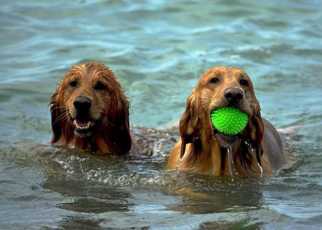 Glückliche Hunde im Kroatien Urlaub