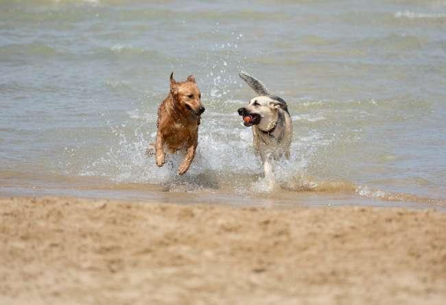 Hunde am Nordsee-Strand