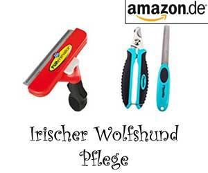 Irischer Wolfshund Pflege