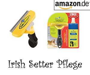 Irish Setter Pflege